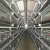 肉鸡笼鸡笼鸭笼自动化养鸡设备山东金石农牧机械