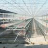 鸡笼鸭笼笼养设备养殖机械肉鸡鸡笼山东金石农牧机械
